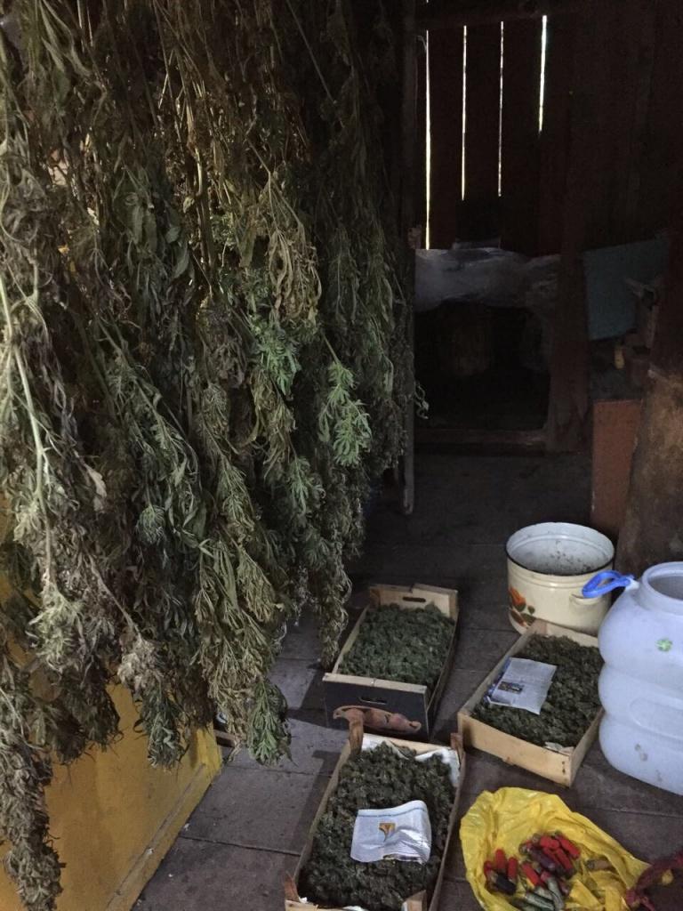 30 кг марихуаны носки с коноплей принтом
