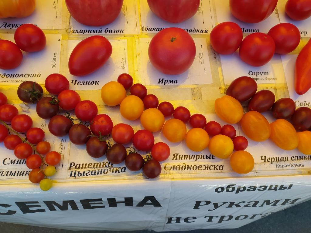 помидоры 3.jpg