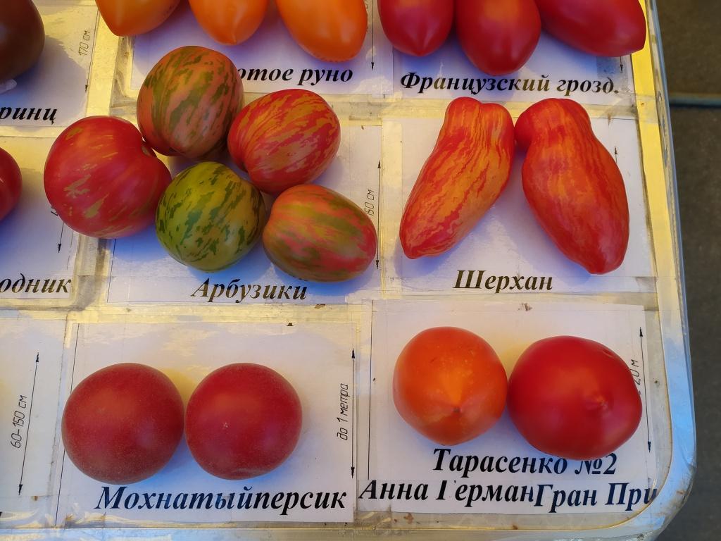 помидоры1.jpg