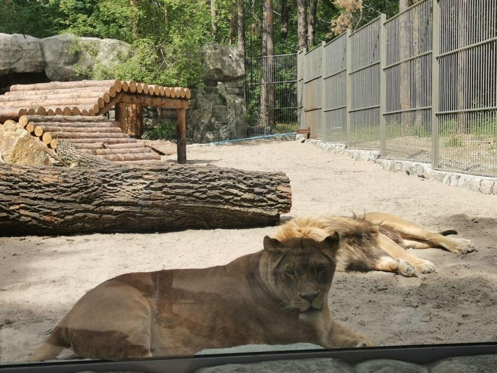тигрры.jpg