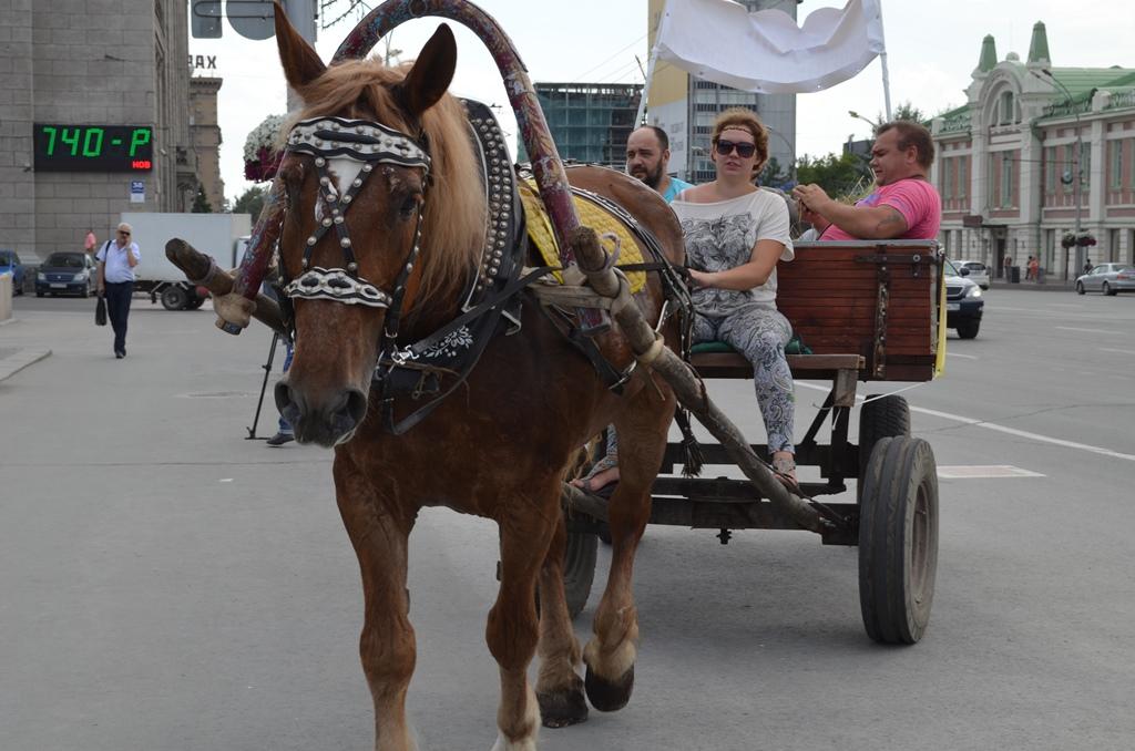 Картинка лошадь запряженная