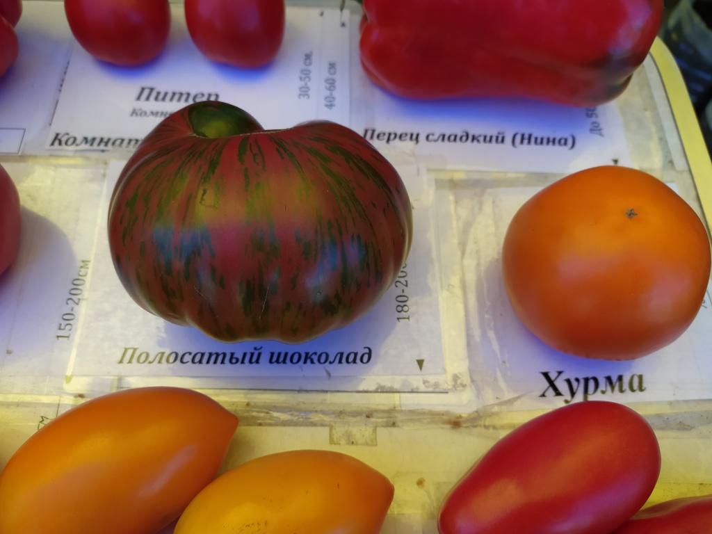 помидоры2.jpg